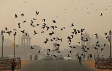 Báo động ô nhiễm không khí ở New Delhi