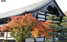 Tới ngôi chùa ngắm lá đỏ đẹp nhất Kyoto