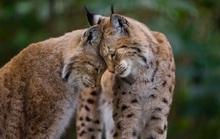 Khoảnh khắc dịu dàng hiếm có của động vật