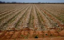 Úc giải cứu nông dân bị hạn hán nặng nề