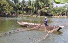 Cá tra giống rớt giá, người nuôi lỗ nặng