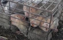 Vụ thú rừng chết dần trong kho hải quan: Chưa chốt phương án xử lý vì thiếu hồ sơ