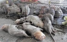 Vụ thú rừng chết dần trong kho hải quan: Tỉnh Quảng Trị chỉ đạo khẩn