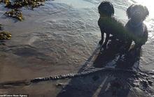 Đào xương, 2 chú chó... khai quật được quái vật biển 65 triệu tuổi