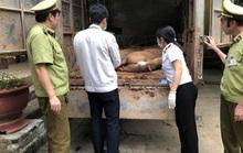 Giá thịt heo tăng sốc, địa phương nói không xuất lậu heo sang Trung Quốc