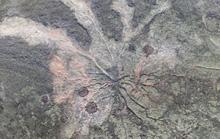 Hóa thạch rừng ma cổ quái nhất thế giới lộ diện ở New York