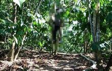 Lâm Đồng: Tá hỏa phát hiện người đàn ông treo cổ trong rẫy cà phê