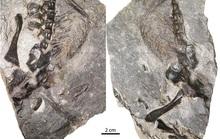 Bí ẩn 2 quái vật 309 triệu tuổi quấn lấy nhau mà hóa đá