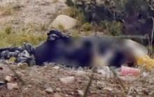 Tìm thân nhân thi thể người đàn ông tóc dài nằm gần tượng đài 3 cô gái