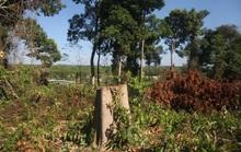 Đồng Nai vào cuộc làm rõ một vụ phá rừng trong khu bảo tồn