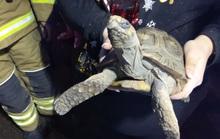 Đã chơi dại, con rùa gây họa còn trưng bộ mặt cáu kỉnh