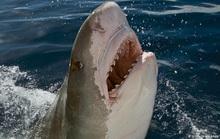 Tìm thấy nhiều tay người trong bụng cá mập hổ