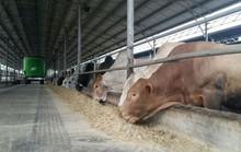 Đại gia đổ tiền vào nông nghiệp bây giờ ra sao?