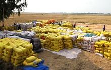 Ngân hàng cam kết bơm đủ vốn cho lúa gạo