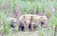 Mùng 3 Tết vào rừng tìm bò, người đàn ông nghi bị đàn voi quật chết