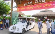 Du khách ùn ùn kéo đến Tràm Chim tham quan, nghỉ dưỡng trong dịp Tết