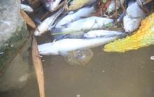 Bất ngờ nguyên nhân nước kênh nổi bọt, chảy đến đâu cá chết trắng