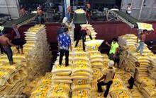 Lúa thơm Việt Nam sốt trên đất Thái