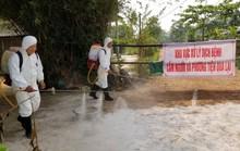 Thêm điểm dịch tả heo châu Phi thứ 2 tại Thừa Thiên - Huế