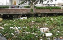 Cần bàn tay sắt và sự đồng lòng để dẹp nạn xả rác