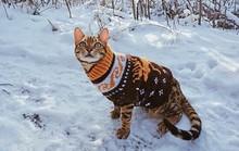 Du lịch sang chảnh cùng mèo cưng khắp chốn 'tiên cảnh'