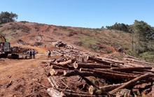 Chủ tịch xã nhận 350 triệu đồng để lâm tặc hạ rừng
