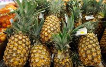 Dứa organic vào Mỹ: Quả ngọt sau hành trình gian nan