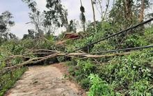 Lốc xoáy kinh hoàng gây thiệt hại nặng ở Quảng Nam