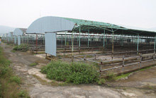 Bộ Công an yêu cầu định giá dự án nuôi bò ngàn tỉ liên quan đến cha con Trần Bắc Hà
