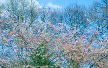 Chiêm ngưỡng vẻ đẹp hoa mùa xuân ở Bỉ