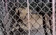 Đi qua ký túc xá, 1 nữ lao công bị chó nam sinh nuôi lao ra cắn xé