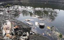Đà Nẵng: Cá chết do hàm lượng ô xy hòa tan không đảm bảo quy chuẩn