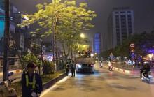 Hà Nội lý giải gì về việc bất ngờ chặt hạ hàng loạt cây phượng trong đêm?