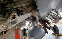 """""""Tia chớp"""" F-35 hỏng nặng vì bị chim đâm trúng"""