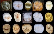 Phát hiện tổ tiên chung của người hiện đại và người tuyệt chủng