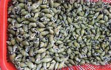 Về Đà Nẵng tìm ốc cà na xào sả ớt
