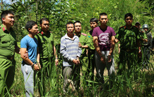 Bắt đối tượng đầu độc hơn 10 ha rừng thông rồi lẩn trốn ở TP HCM