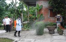 Xuất hiện ổ dịch tả heo châu Phi thứ 2 ở Quảng Trị