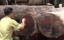 Sở NN-PTNT nói gì về việc Chi cục trưởng Kiểm lâm nhận gỗ lậu?