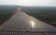 Vận hành nhà máy điện mặt trời công suất 40 MWP ở Mũi Né