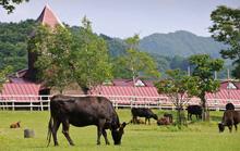 Top 10 mô hình chăn nuôi hái ra tiền tại Việt Nam