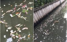 Khách sạn Thái Lan bị phạt vì để bao cao su nổi đầy kênh