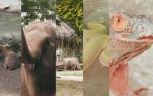 [Video] - Cận cảnh 1 trong 10 vườn thú lâu đời nhất thế giới