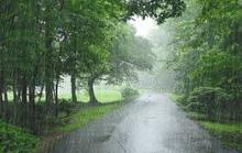 Ngày mưa, da diết nhớ nồi ốc nhồi xào rau lá vườn nhà của chị