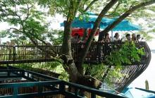 Quán cà phê cho khách ngồi trên cây ở Cần Thơ