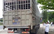 Chở heo chết từ Quảng Nam ra Đà Nẵng tiêu thụ