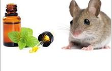 5 mẹo đuổi chuột tự nhiên không cần dùng thuốc
