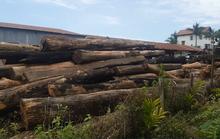 Hàng loạt cán bộ nhận tiền của trùm gỗ lậu Phượng râu