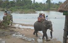 Chật vật giúp voi mang thai, đẻ con