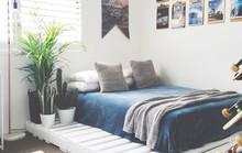 Các kiểu giường pallet có giá hợp lý cho phòng ngủ của bạn